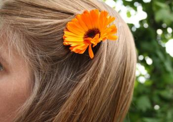 Ополаскивать календулой волосы